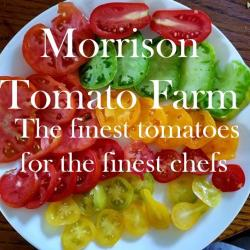 Morrison Tomato Farm the Finest Tomatoes for the Finest Chefs